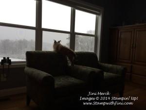 Snow Storm Feb 11 2014 Chewie (1)