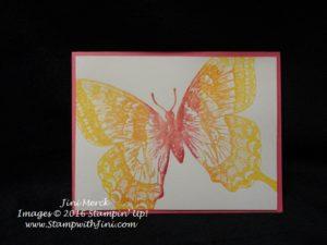 Swallowtail (5)
