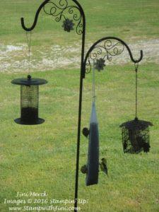 birds at window